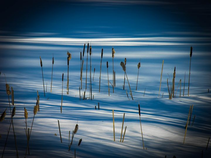 Winter Cattails - Sherm's Photo Service