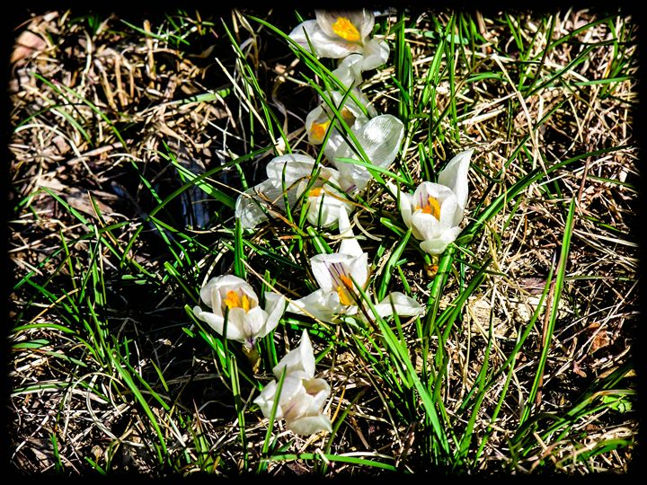 Spring is in the Air - Sherm's Photo Service