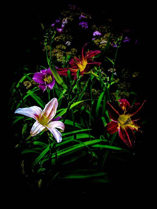 Colorful Lilies - Sherm's Photo Service