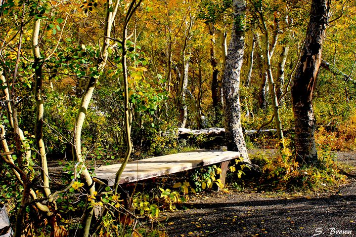 Hidden Bench - S. Brown Photography