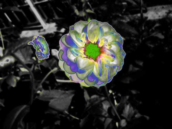 Solar Flower - S. Brown Photography