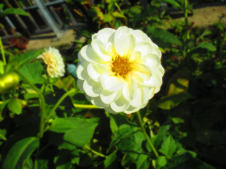 White Flower - S. Brown Photography