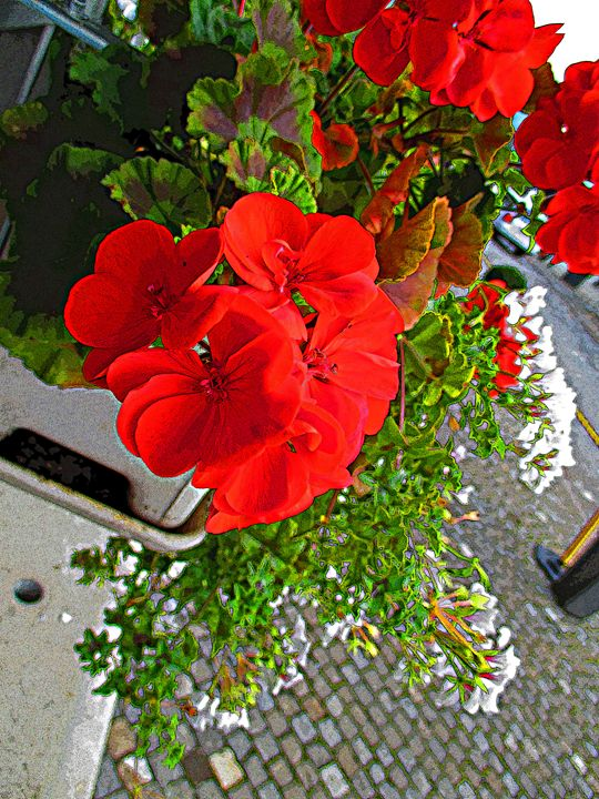 Flowers in Switzerland - S. Brown Photography