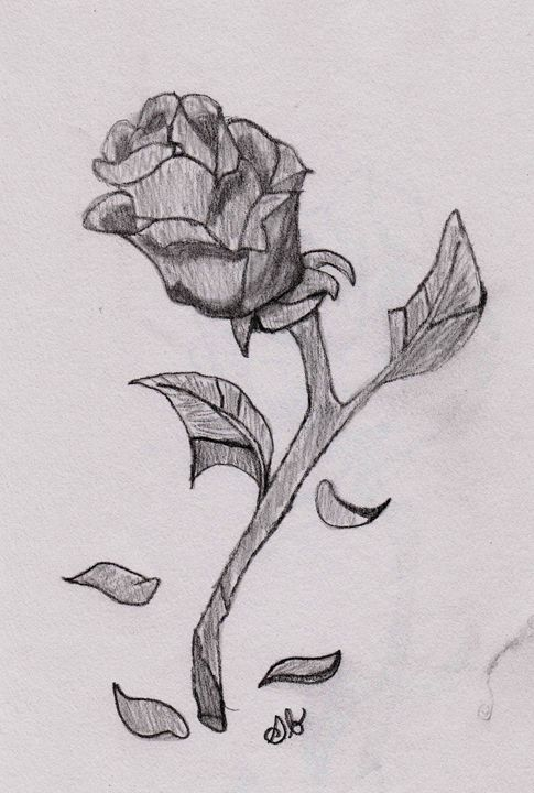 Wilting Rose - S. Brown Photography