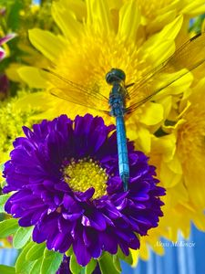 Ode to the Dragonfly - Intuitive Artist by the Beach