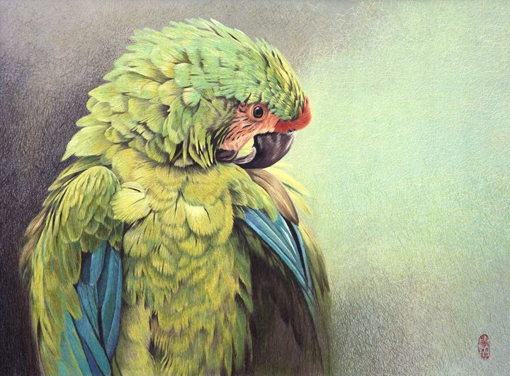 Macaw - Mulberry Gallery