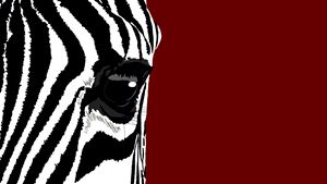Eye of a Zebra - Kaylee King