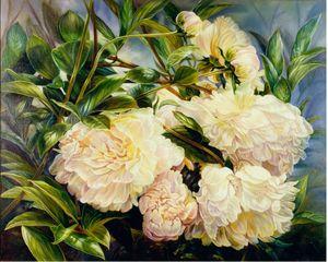 """Sarah Bernhardt"" Peony"