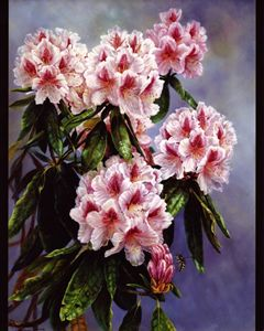 Rhododendron Gazing - The Art of Carolyn Sterling