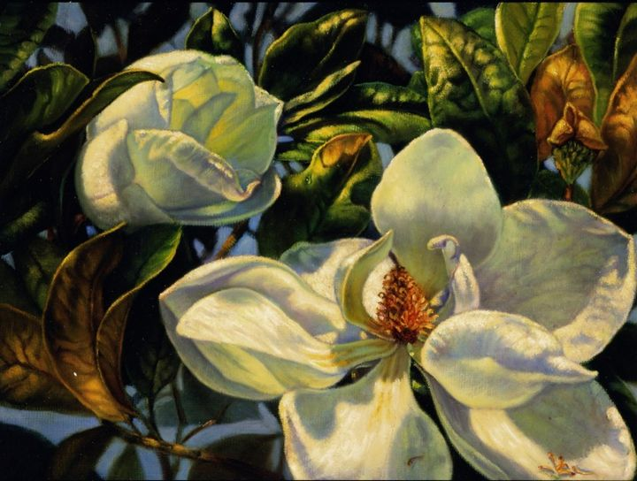 Glorious Magnolia - The Art of Carolyn Sterling