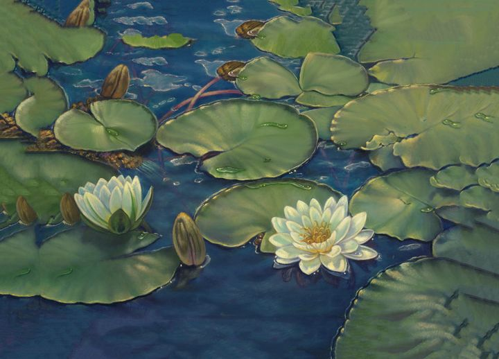 Water Lilly - The Art of Carolyn Sterling