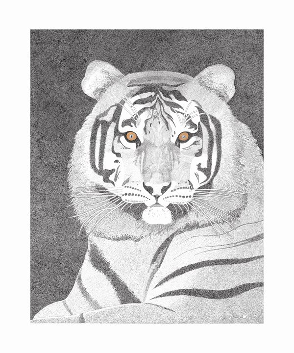 tiger watching you - greg galanski gallery