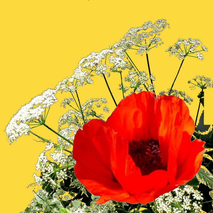 ORANGE POPPY AN LACE FLORAL - sharlesart