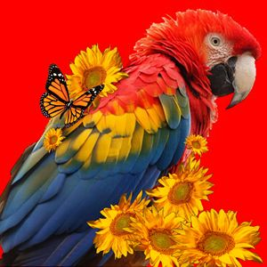 RED MACAW & SUNFLOWERS