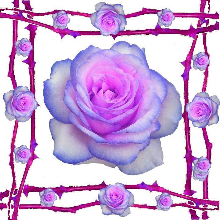 DECORATIVE ROSES & THORNS - sharlesart