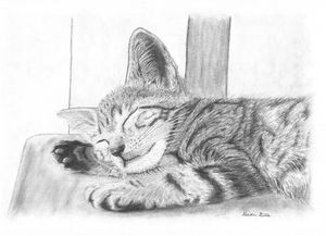 Kitten Taking A Well Deserved Nap - Devon Gillis