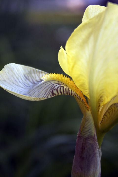 Yellow Beauty - Sparrow Design Art Gallery
