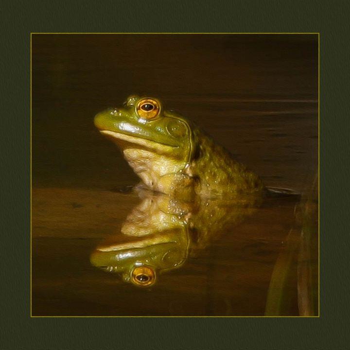 Frog in the Sun - Jana Rene' Photography