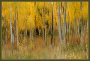Dancing in the Aspens - Jana Rene' Photography