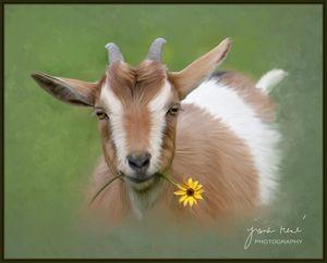 """You can call me Daisy"" - Jana Rene' Photography"