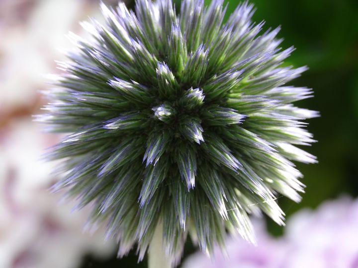 Hypnotic Flower - Dan Jones Photography