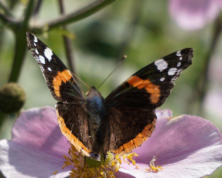Butterfly On A Plant 2 - Dan Jones Photography