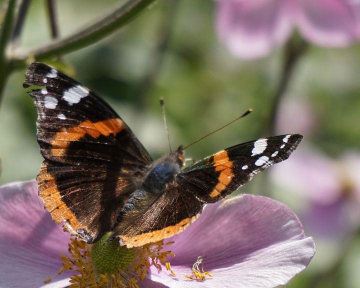 Butterfly On A Plant - Dan Jones Photography