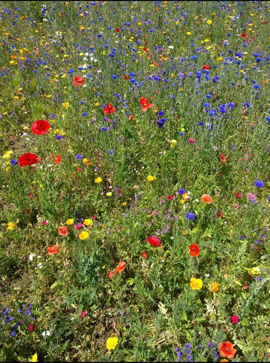 Colourful Flowers in a Meadow - Dan Jones Photography