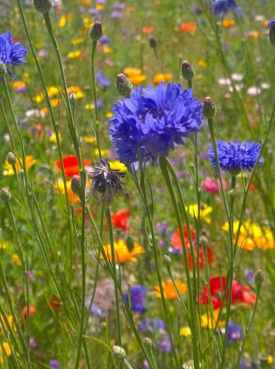 Flower in a Meadow - Dan Jones Photography