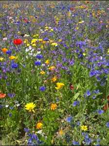 Meadow of Flowers