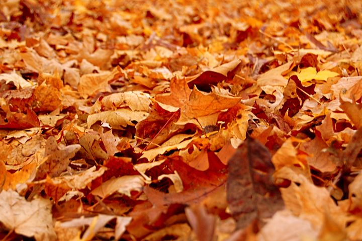 Autumn Leaves - Matt MacMurchy