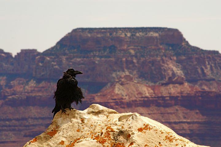 Desert Raven - Matt MacMurchy