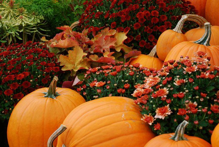 Pumpkin Patch - Matt MacMurchy