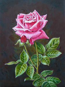 MY ENGLISH ROSE