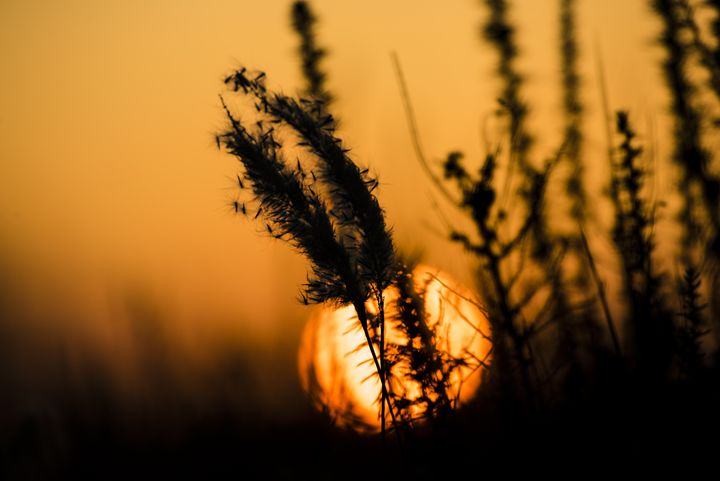 Sunset in the field - YDP