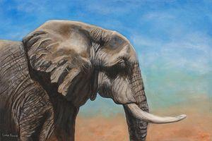 African Elephant Profile