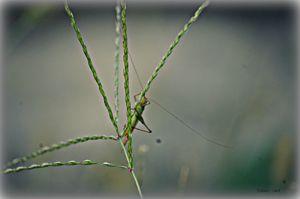 Where Grass Grows