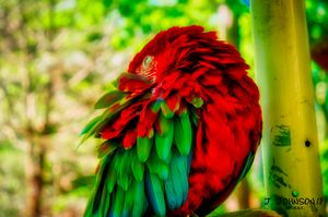 Parrot scratching