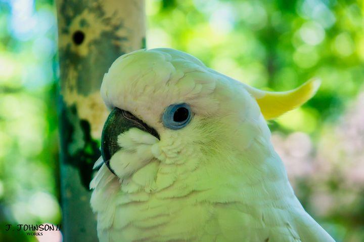 Cockatoo closeup - Works By J. Johnson