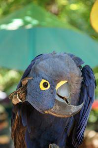 Parrot Thinker
