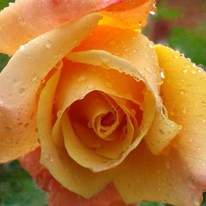 Remember Me Rose - Geraldine Cote