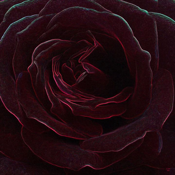 Deep Red Velvet Rose - Geraldine Cote