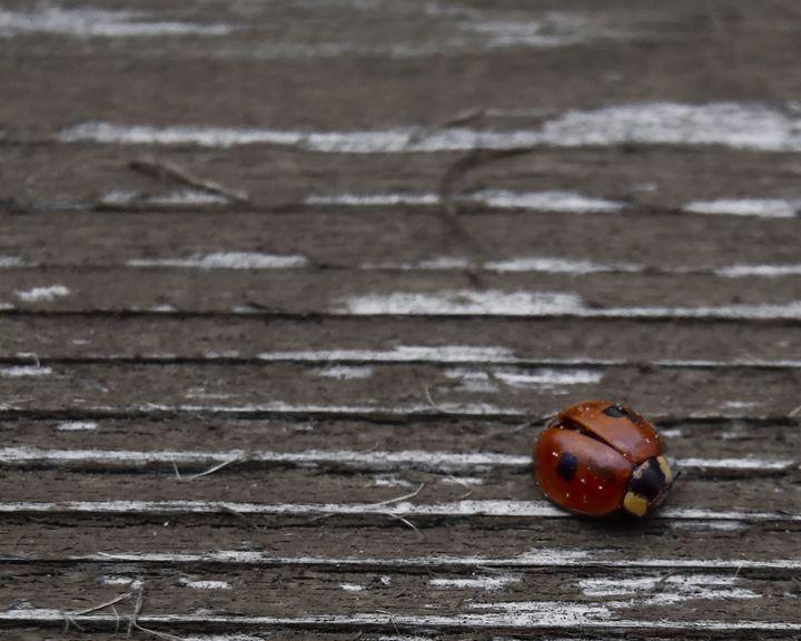 Little bug in the big world - Studio 5