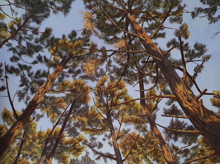 Pins dans le ciel de Biscarrosse - Nadya RIGAILL
