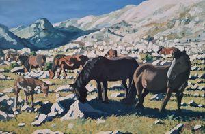 Wild Velebit Horses