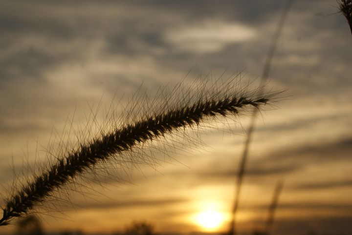 WEEDS - alitvfilm
