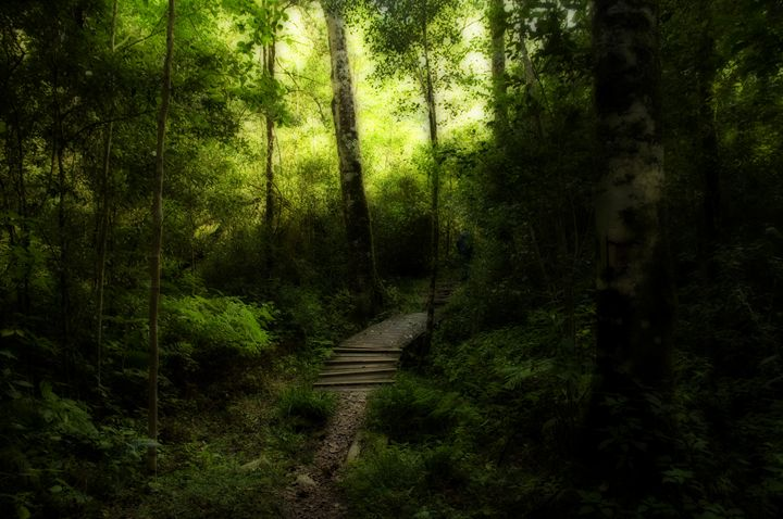 Forest Trail - Sarah-Jane Photography