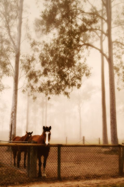 Horses in the fog - Sarah-Jane Photography
