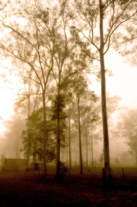 Morning mist - Sarah-Jane Photography