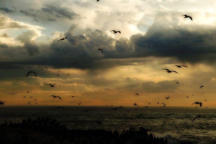Flight before sunset - Sarah-Jane Photography
